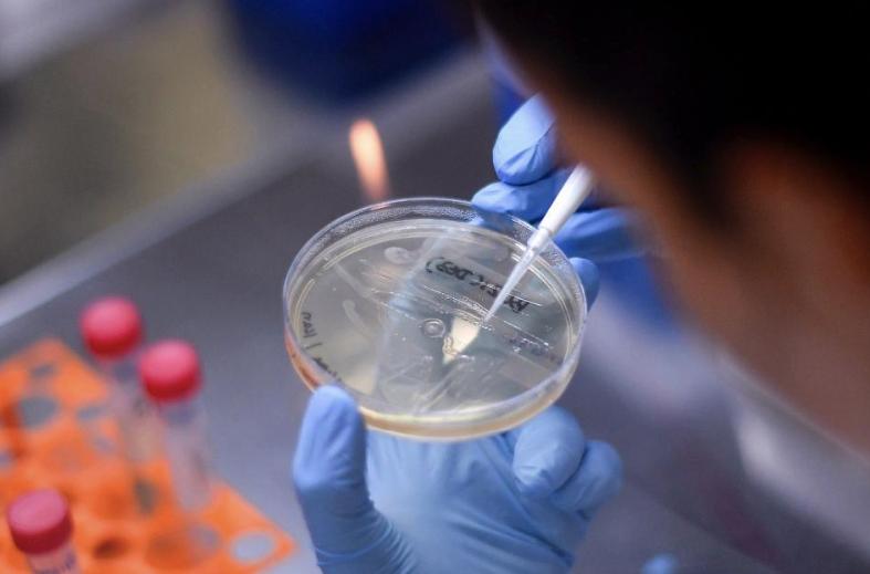 Vacuna contra el coronavirus: funciona en ratones Una científica argentina lidera un grupo internacional de expertos de COVID-19